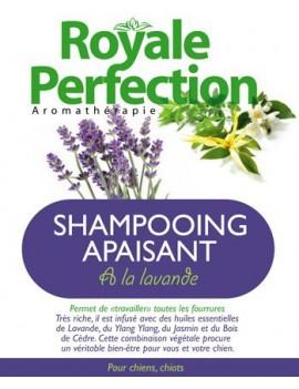 Shampooing Apaisant à la Lavande
