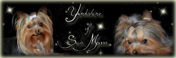 Yorks of Sun Moon